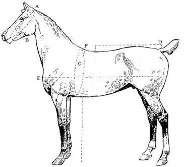 Las tallas de los ponis